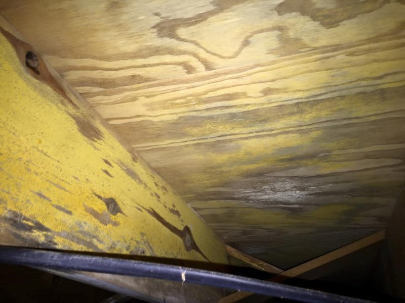 Cleveland Mold Remediation Gallery Photos Of Black Mold