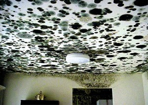 Cleveland Mold Remediation