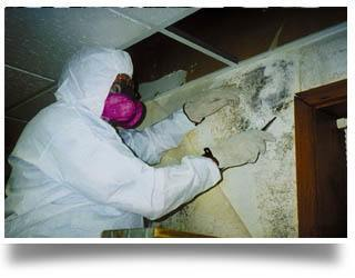 mold remediation Sandusky OH